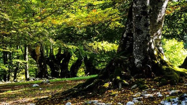 Nei boschi vetusti de La Difesa: la vita segreta degli alberi