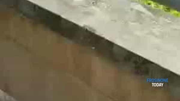 VIDEO | La piazza come una latrina. Uomo defeca all'aperto in pieno giorno