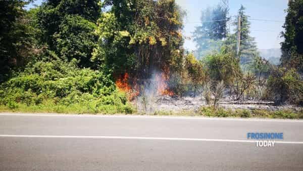 VIDEO | Labico, paura su via Casilina. Incendio brucia un albero e lambisce delle abitazioni